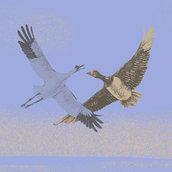 9/May World Migratory Bird Day