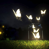 Butterflies wallpaper