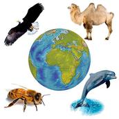 Suoni di Fauna